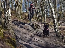Dog trail!